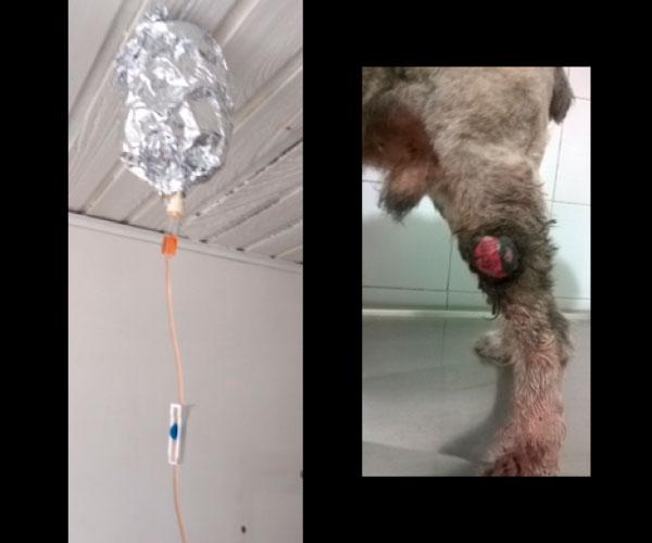 oncologia-veterinaria-lesion