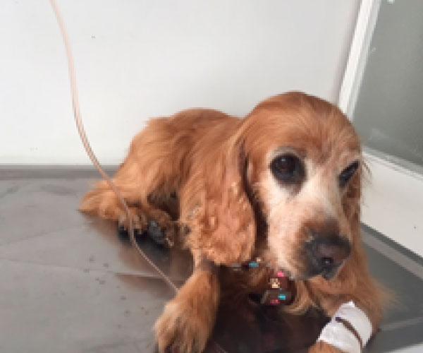 oncologia-veterinaria-paciente